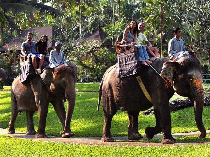 Bali Elephant Ride Tour Service
