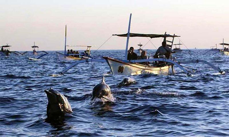 Dolphin Bali Tour
