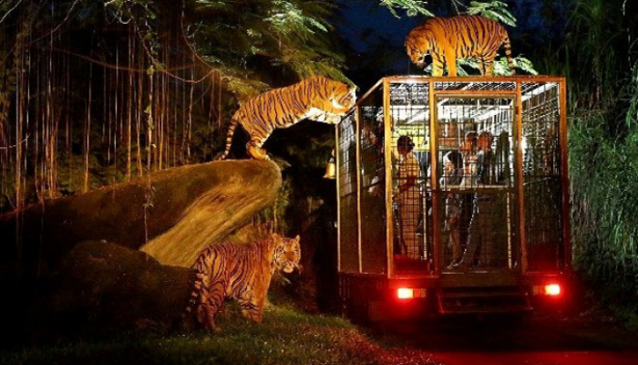 Bali Night Safari Package