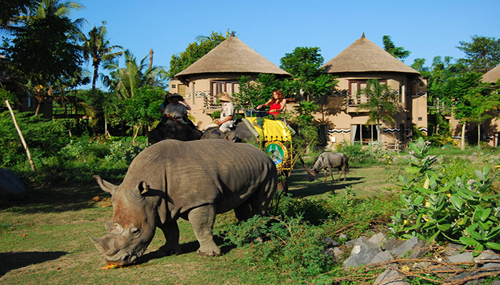Bali Elephant Back Safari Package