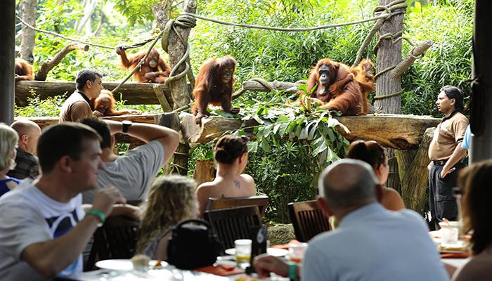 Bali Zoo Breakfast With Orangutan