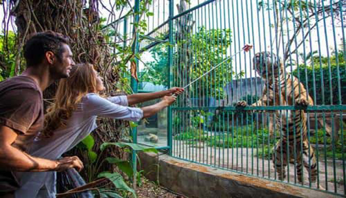 Bali Zoo Tour Package