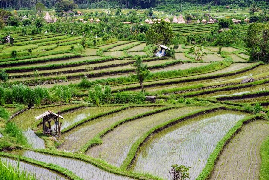 Tegalalang rice terrace bali tour service