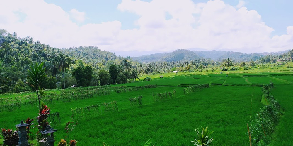 Pupuan Rice Terrace - Bali Tour Package