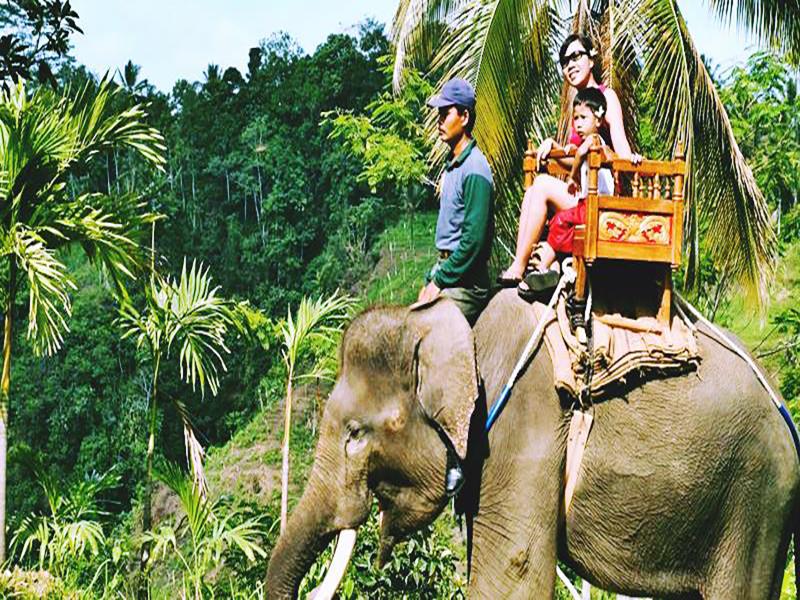 Bali-Elephant-Ride-Bali-Tour-Service