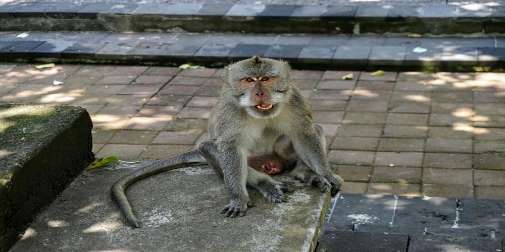 Ubud Monkey Forest - Bali Tour Package