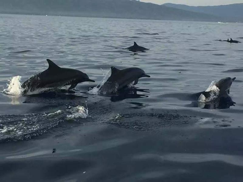 Watching-Dolphin-at-Lovina-Beach-Bali-Tour-Service