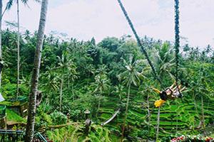 Bali Swing - Bali Tour Package