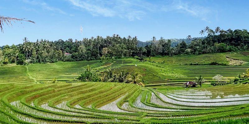 Belimbing Rice Terrace - Bali Tour Package