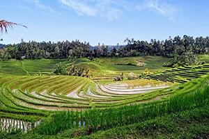 Belimbing Rice Terrace - Bali Tour