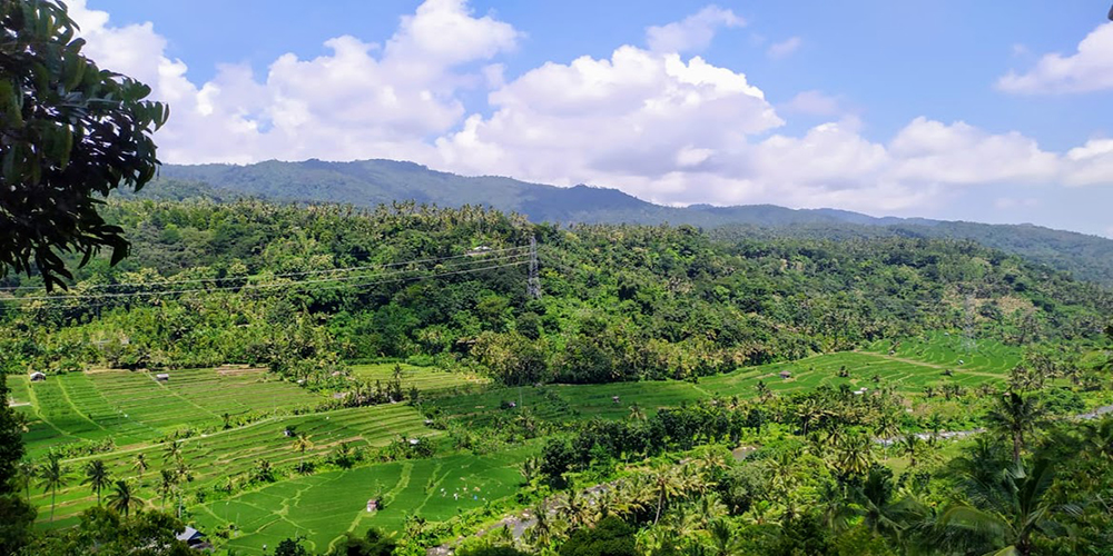 Bukit Jambul Rice Terrace - Bali Tour Package