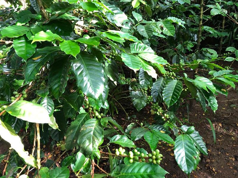 Cafe Plantation - Bali Tour