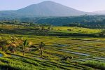 Jati Luwih Rice Terrace UNESCO World Site - Bali Tour Package