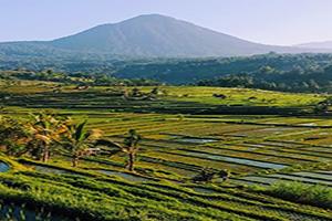 Jati Luwih Rice Terrace UNESCO World Site - Bali Tour package