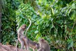 Monkey Forest - Bali Tour Service