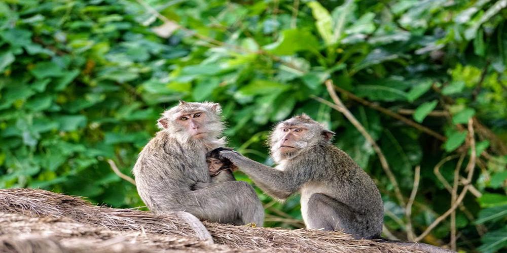 Monkey Forest - Bali Tour Service