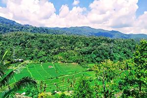 Pupuan Rice Terrace - Bali Tour Service
