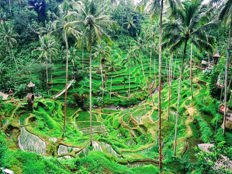 Tegalalang Rice Terrace - Bali Tour Service