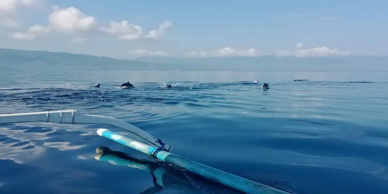 Watching Dolphin at Lovina Beach - Bali Tour Service