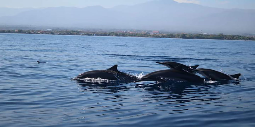 Watching Dolphin at Lovina Beach - Bali Tour Service