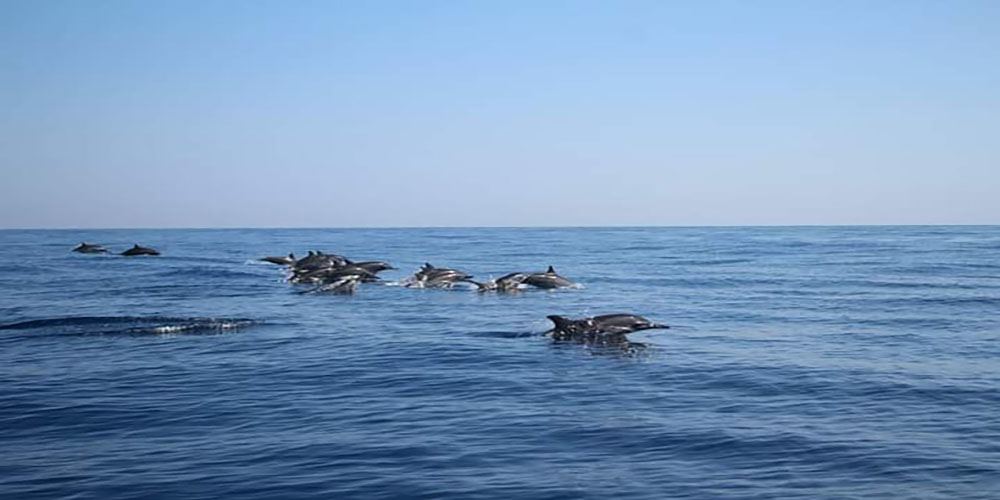 Watching Dolphin at Lovina Beach - Bali Tour Package