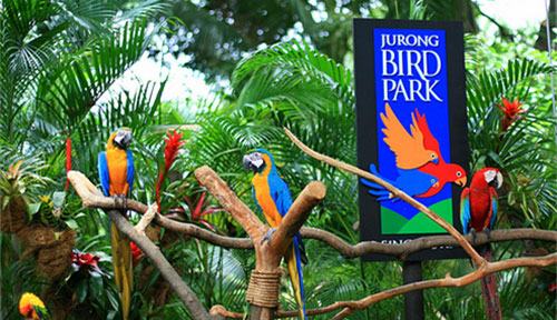 Bali Bird Park - Bali Tour Package