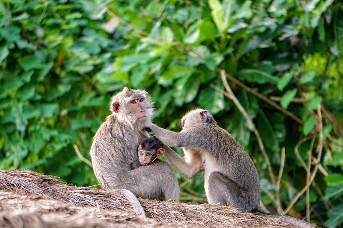 Sangeh Monkey Forest - Bali Tour Package