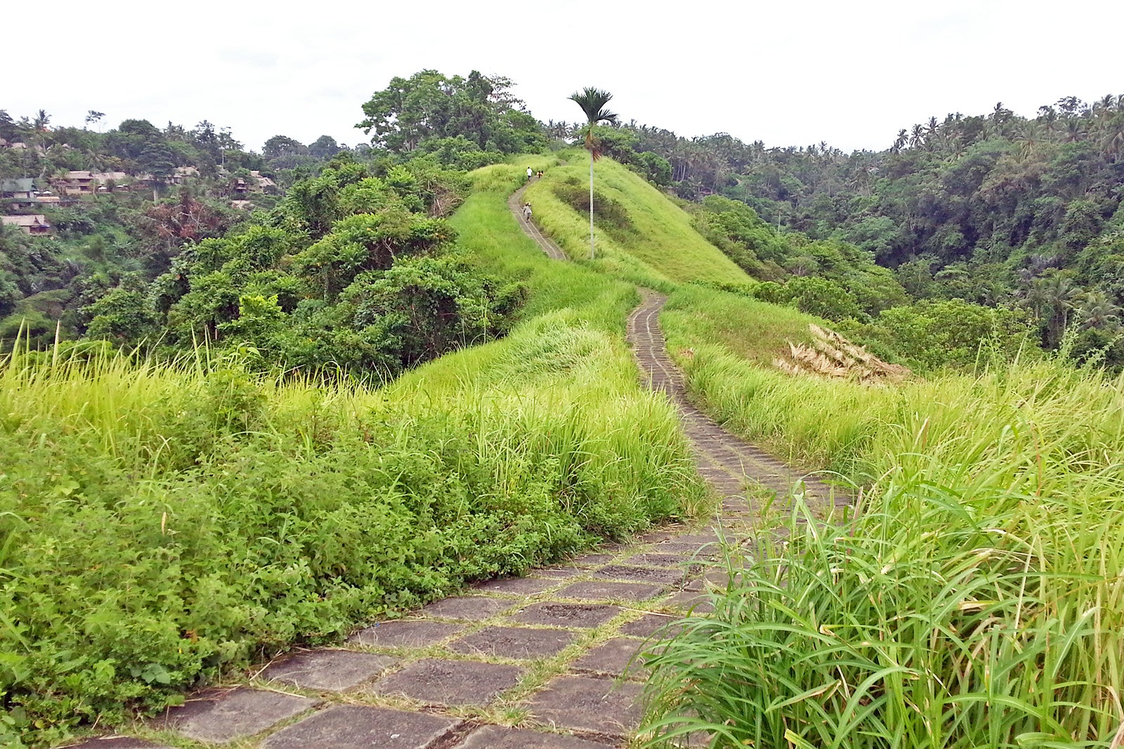Campuhan Hill - Bali Tour Package