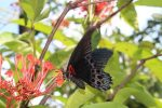 Butterfly Park - Bali Tour Package