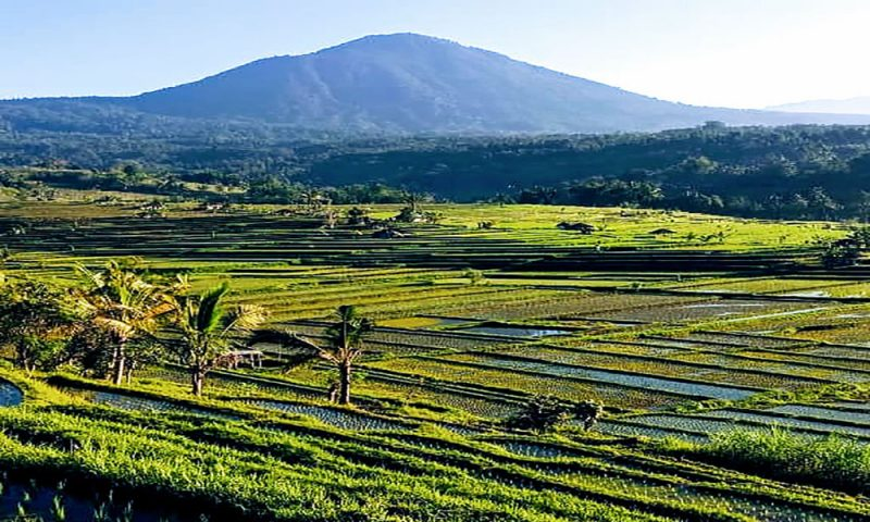 Jatiluwih Rice Terrrace - Bali Tour Package