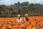 Kasna Flower Field - Bali Tour Package