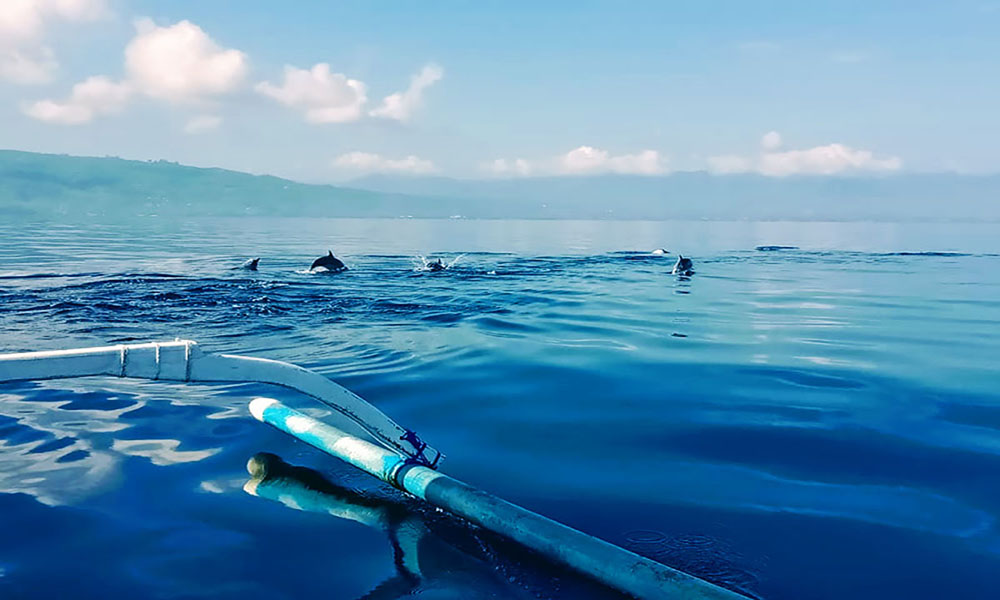 Lovina Beach Watching Dolphin - Bali Tour Package
