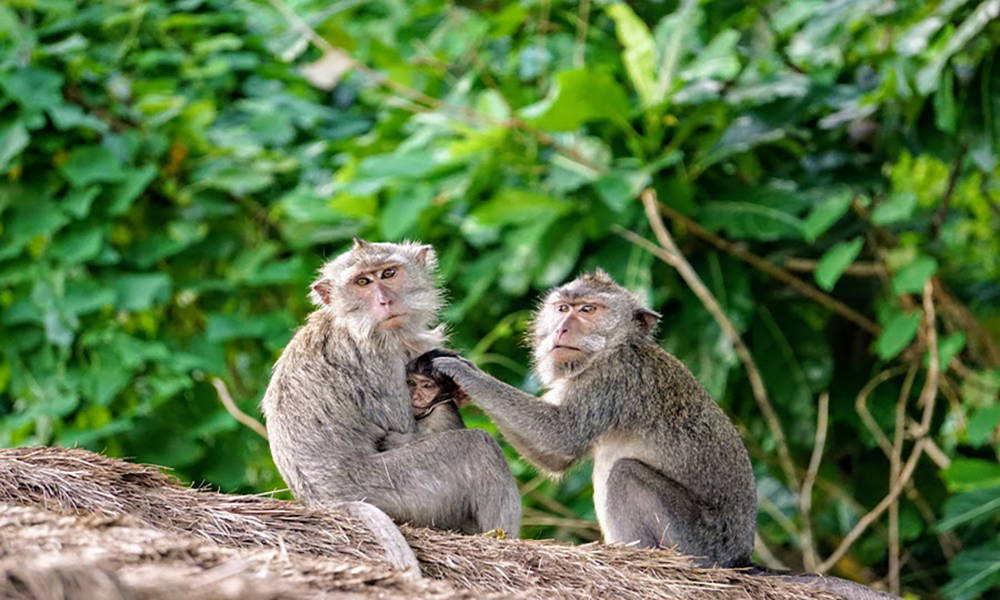 Monkey Forest - Bali Tour Package