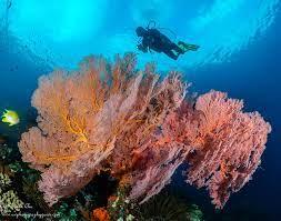 Underwater Panorama of Tulamben Beach - Bali Tour Package